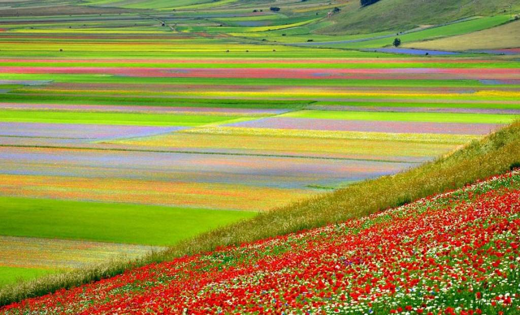 La fioritura di Castelluccio di Norcia