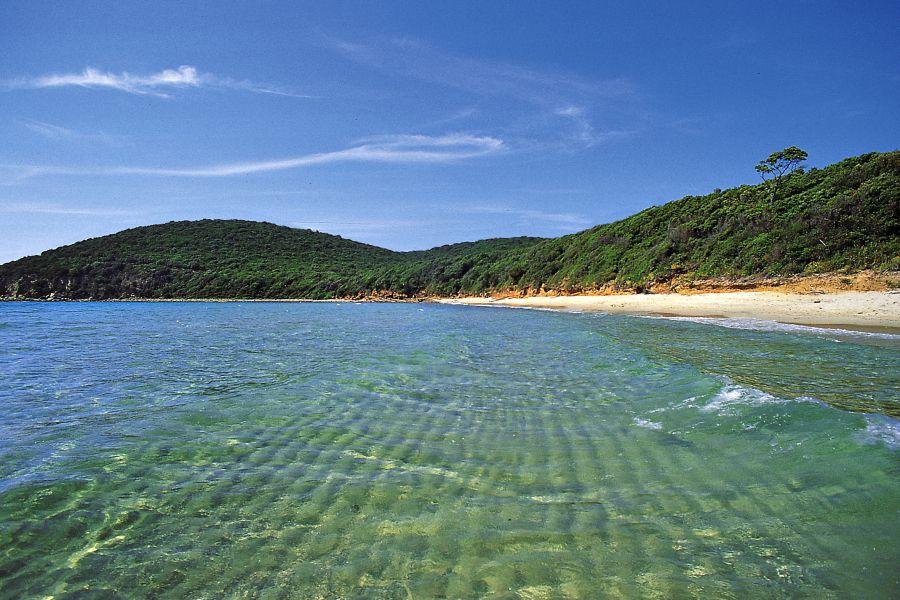 Cala Violina: una delle spiagge più belle della costa toscana