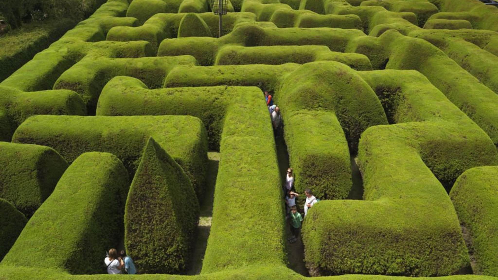 Ashcombe Maze