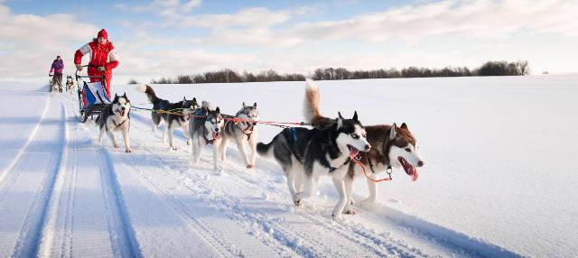 Slitta trainata dai cani in Alaska